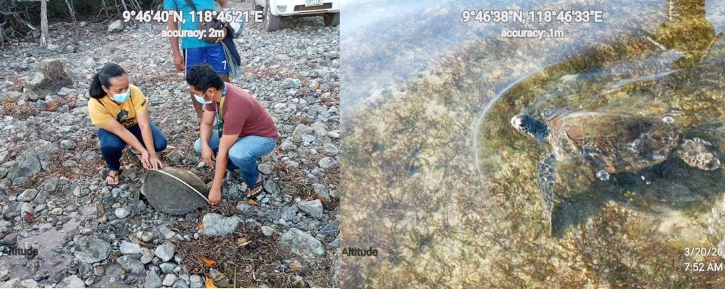 DENR rescues injured Green Turtle in Palawan